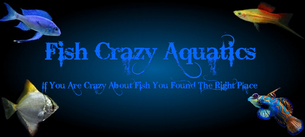 FISH CRAZY AQUATICS