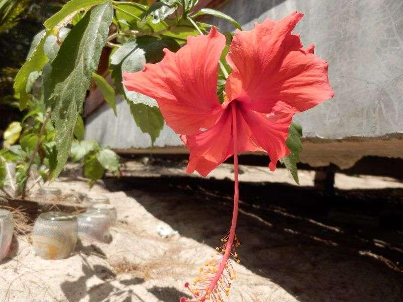 diese Blume haben wir unterwegs doch gesehen